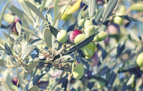 Aceite de oliva cortijo aparicio
